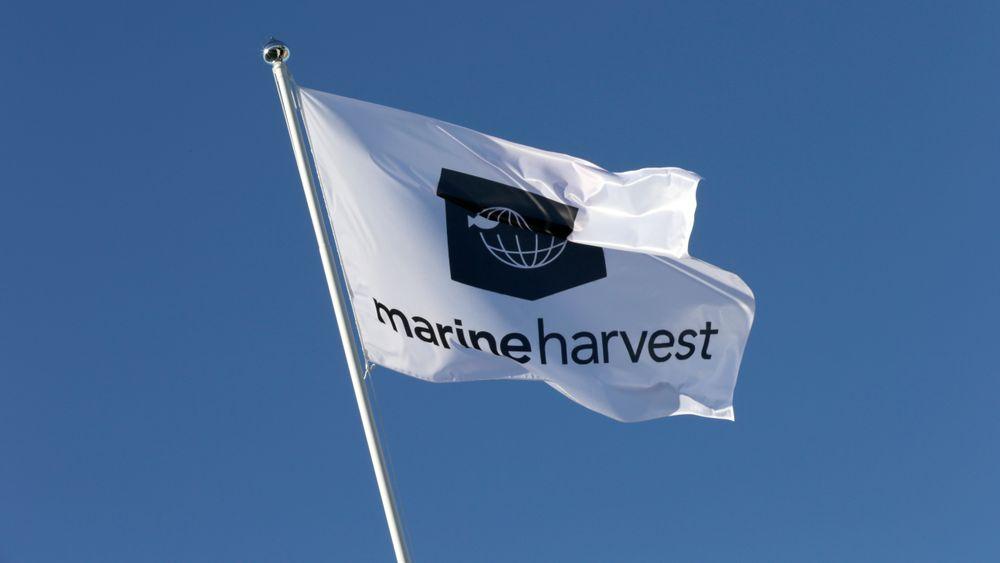 Marine Harvest skifter navn til Mowi.