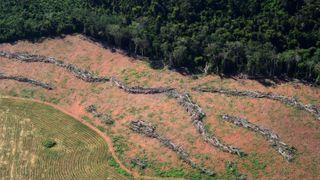 Norge øker støtten til vern av Brasils regnskog - Brasil truer med økt avskoging