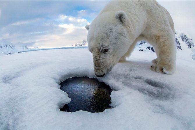 Denne nysgjerrige isbjørnen skapte vanskeligheter for naturfotografen Audun Rikardsen.
