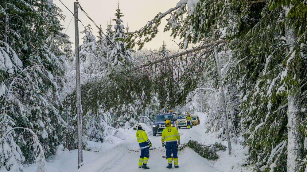 Mye snø har gjort 2018 til et kostbart år for Eidsiva Nett. Bare i januar hadde de forsyningsproblemer tilsvarende 30 millioner kroner. Nå håper de at knusing av kart- og vedlikeholdsdata kan hjelpe dem å forebygge linjebrudd på grunn av trepåfall.