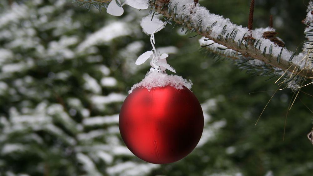 Julekulene skal henge på tette, grønne grener.