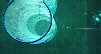Pelaqua AS  Gründerselskap – dannet av Mads F. Heiervang, Pål Grøthe Sandnes, Audun Gravdal Johansen og Bernt Sørby.  Utviklet merdkonseptet Waveflex for eksponerte lokasjoner, bølger opp til Hs 15m  Konseptet er basert på tre stålringer, stilt vertikalt i vannet, slakkforankret med kjettingliner til havbunnen, med nøter spent opp rundt. To separate kamre for fisk. Fôring, oksygen mm. Via stålringene. Størrelse fullskala: Diameter på ringene: 50 meter. Total lengde: 240 meter. Biomasse: 6.234 tonn
