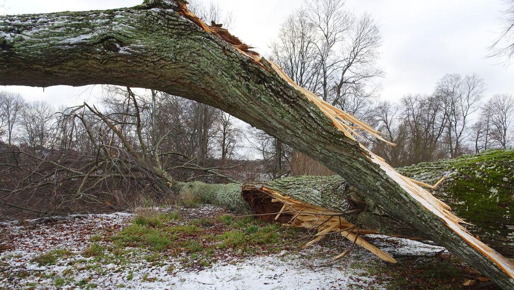 Nyttårsstormen Alfrida har rast over Norden, og rammet østersjøområdet særlig hardt. Bildet er fra Varby gård i Huddinge.