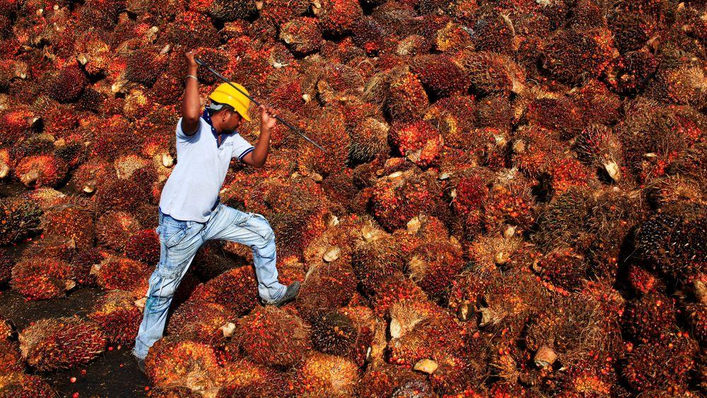 Stadig mer av den palmeoljen som EU importerer, blir brukt til å lage biodiesel framfor å inngå i mat- og kosmetikkprodukter, ifølge tall fra Oilworld og Eurostat.