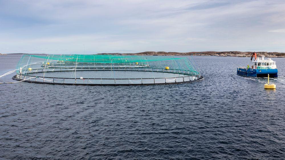 Spørsmålet om oppdrettsnæringen bør betale ekstra skatt for å benytte seg av fellesskapets ressurser i form av hav og fjorder blir diskutert i en rekke partier denne våren. Bildet er tatt i Frohavet på Trøndelagskysten.