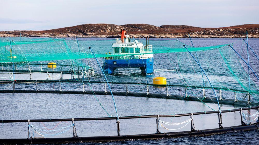 Ekstraskatt for oppdrettsnæringen blir diskutert i en rekke partier denne våren, men kan bli stanset på landsmøtene. Bildet er tatt ved et oppdrettsanlegg i Frohavet på Trøndelagskysten.