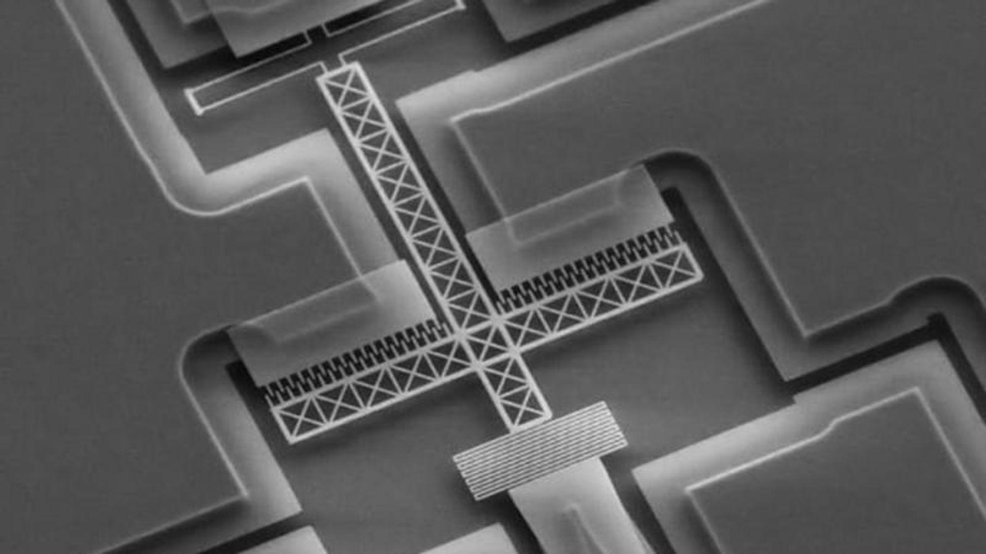 En svensk lidar i mikrostørrelse. Den betraktes best under et mikroskop.