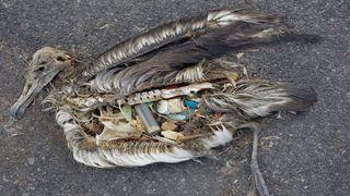 Norge ber 180 land slutte opp om strengere regler for handel av plastsøppel