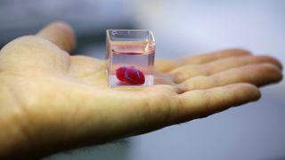Forskere har 3D-printet et hjerte. Nå må de lære det å pumpe