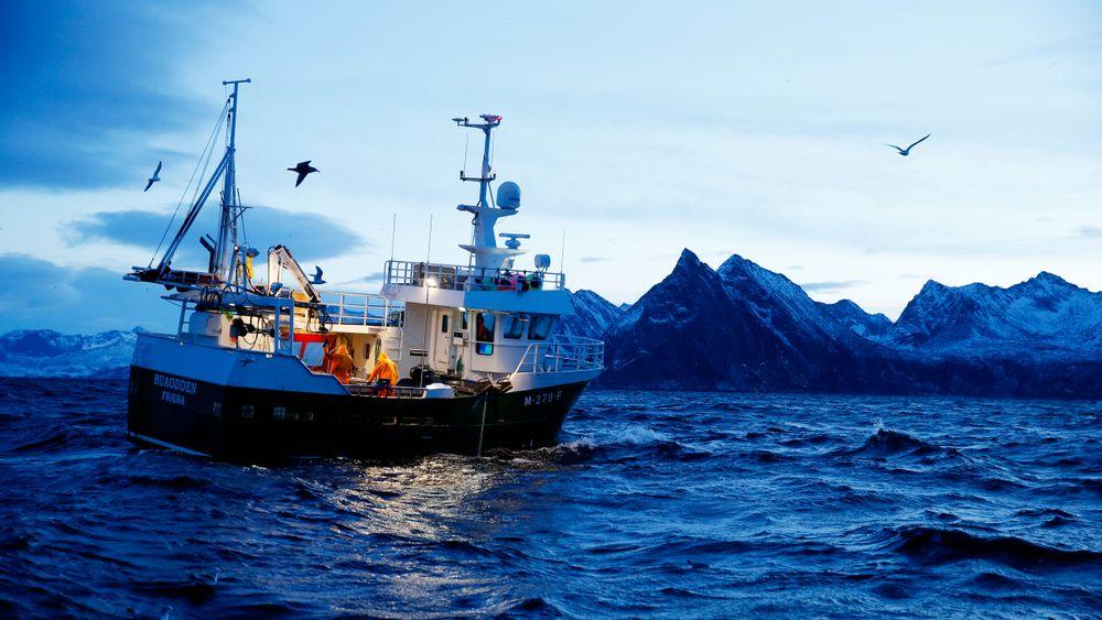 Det årlige lofotfisket starter i januar og avsluttes i slutten av april. For første gang har førstehåndsverdien passert 1 milliard kroner