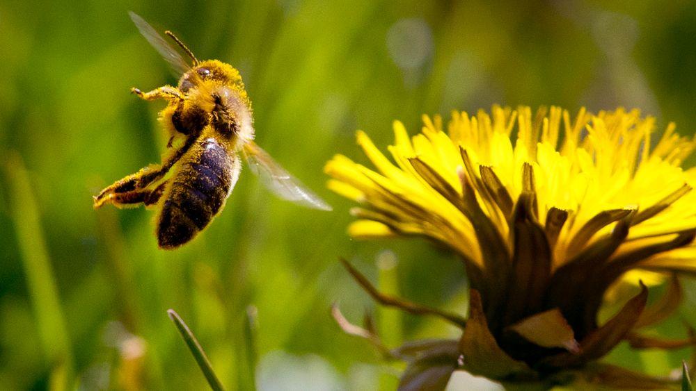 En av konklusjonene i FN-rapporten som kommer neste uke er at opptil én million arter i verden kan bli truet av utryddelse.