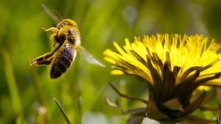 Forsker: Tap av natur like stor trussel som klimaendringene
