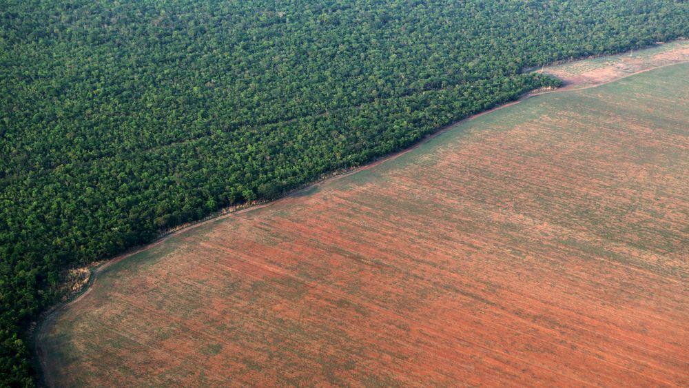 Regnskogen Amazonas blir stadig avskoget. På dette landområdet i Mato Grosso, vest i Brasil, skal det plantes soyabønner. Bildet er fra oktober 2015.