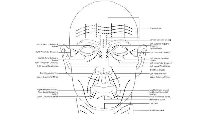 Tegning av ansiktslinjer