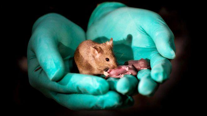 Kan lage babyer av hudceller