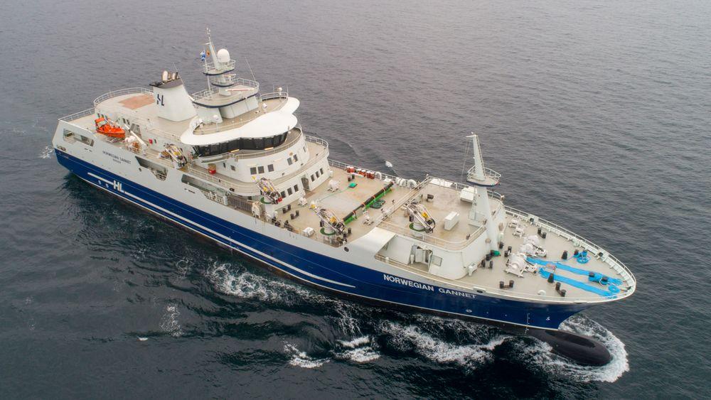 Norwegian Gannet, Hav Line sitt slakteskip for laks og ørret.