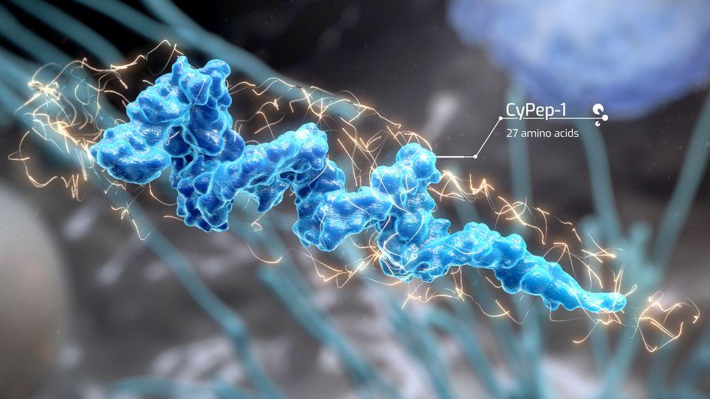 – Vi har laget hundrevis av molekyler som er blitt screenet for gjenkjennelse av kreftceller, og vi fikk ett treff, forteller medisinsk ansvarlig Lars Prestegarden.