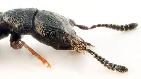 Forskere: Planteimport tar med insekter vi aldri før har sett i Norge