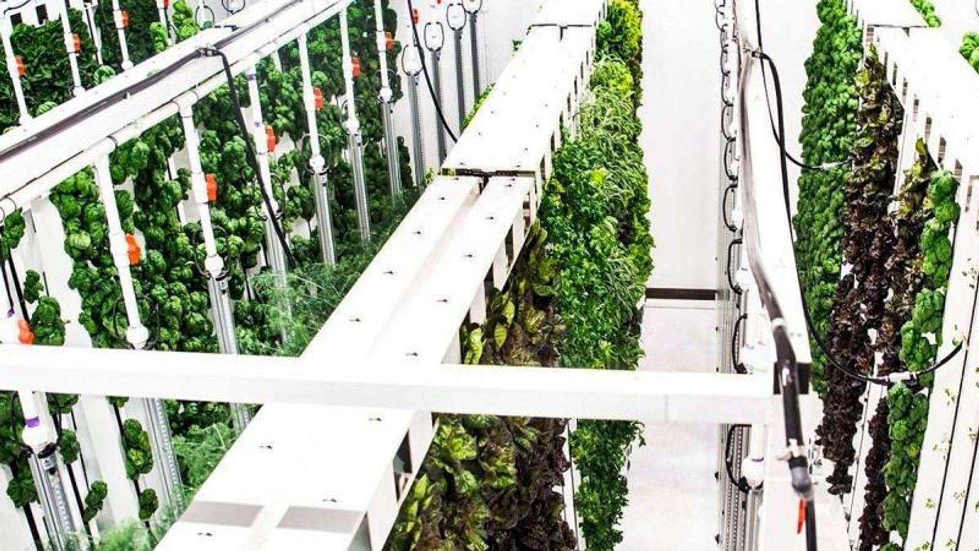 I Plentys såkalte zipgrow-tårn vokser planter i en slags kunstige nettfibre eller granulat.