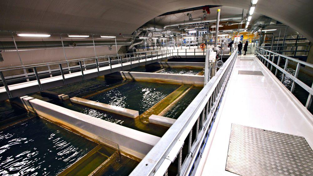 De siste årene har det blitt flere innbyggere i Norge som har fått registrert E. coli-bakterie i drikkevannet, ifølge tallene fra Statistisk sentralbyrå. Illustrasjonsbilde fra Oset vannrenseanlegg i Oslo.