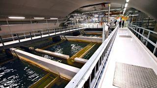 76.000 har E. coli i drikkevannet – sjekk din kommune her