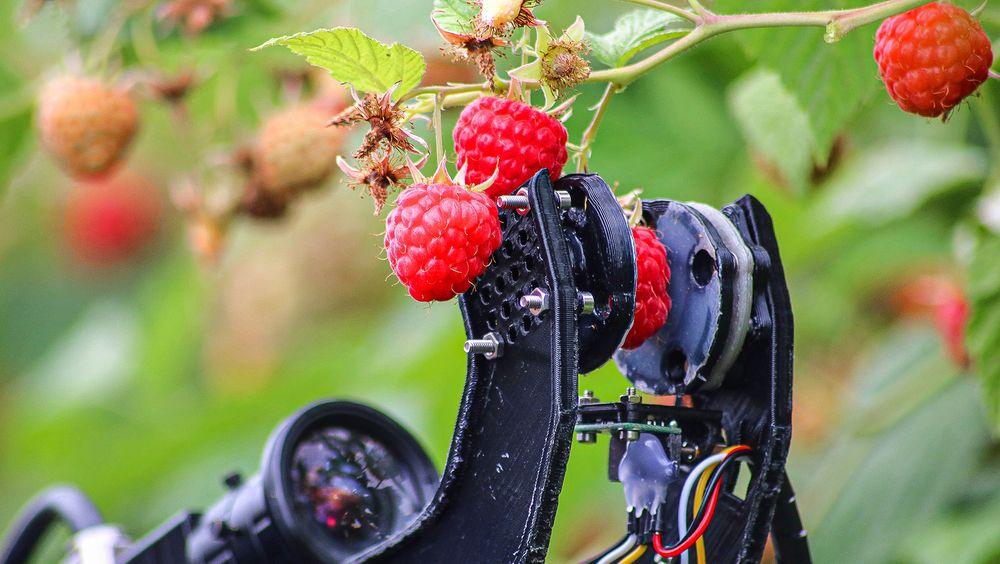 For å plukke et bringebær må roboten først identifisere det på busken. Så må plukkearmen posisjoners korrekt slik at fingrene kan gripe forsiktig om bæret.
