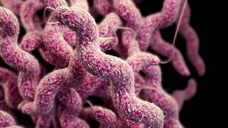 72-åring fra Askøy døde av blodforgiftning som følge av campylobacter-bakterier