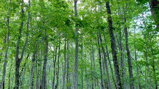 Rapport: Verneverdig skog hogges, uinteressant skog får stå
