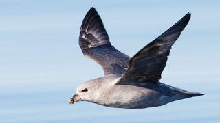 Dansk studie: Over ni av ti døde havhester svelget plast