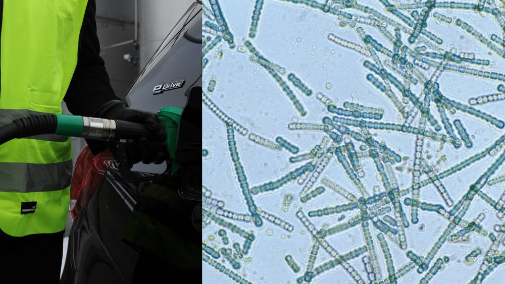 Forskere ved Uppsala universitet er i ferd med å knekke koden når det gjelder å produsere biodrivstoff i stor skala fra bakterier. Forskningen er en del av EU-prosjektet Photofuel, som er koordinert av Volkswagen.