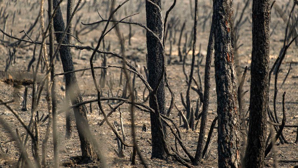 Enorme skogbranner herjer på taigaen i Sibir. Røyken kan forsterke den globale oppvarmingen, frykter eksperter.