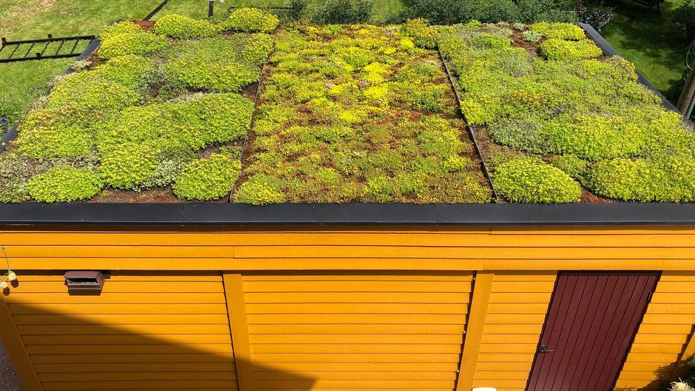 Grønne tak er et av flere tiltak som gjør at kommunene sparer milliarder på investeringer i infrastruktur.