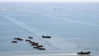 Havforskningsinstituttet: Sjømat blir mer enn fem ganger så stort i framtiden – men laks er ikke løsningen