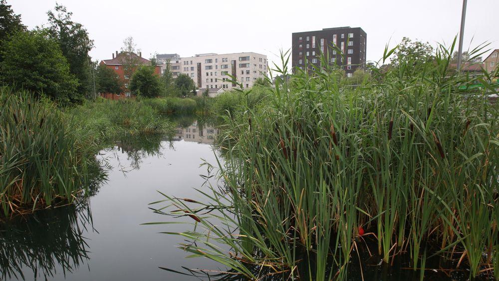 Miljø- og samferdselsbyråd Lan Marie Berg vil åpne flere vassdrag i Oslo i tiden som kommer. Her ved Hovinbekken.