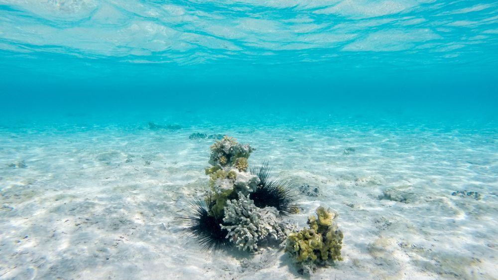 Korallrevene kan forsvinne helt på grunn av klimaendringer.