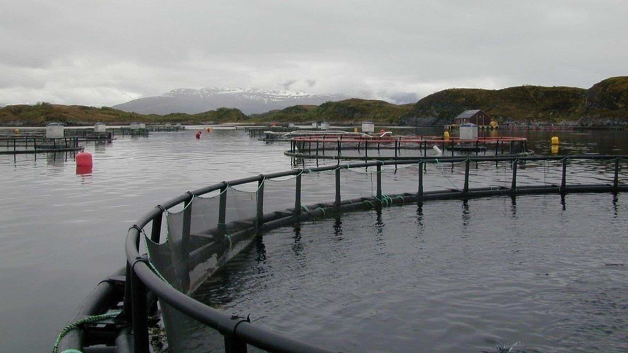 Det regjeringsutnevnte skatteutvalget foreslår å innføre grunnrentebeskatning for norsk oppdrettsnæring.