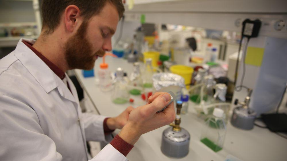 Erland Årstøl tar doktograd i bioteknologi ved NTNU. Han forsker på elektrondonasjon fra alger. Erland Årstøl. Fagfeltet er bioteknologi, temaet er alger og elektrondonasjon i fotosyntesen. Målet er at når algene får lys på seg så skal de donere elektroner til en anode og produsere strøm.
