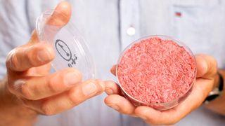 Her dyrkes kunstig kjøtt. Det kan ta overstore deler av markedet