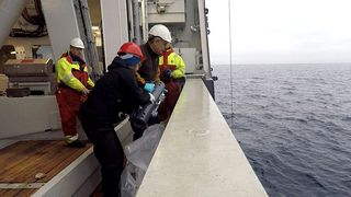130 forskere vil finne svar: Hva skjer i Barentshavet om isen forsvinner?