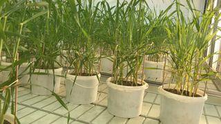 Fosformangel truer landbruket – nå vil forskerne finne klimavennlige fosforkilder