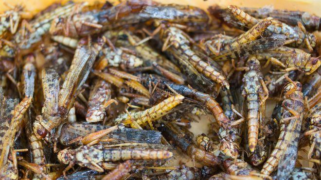 Produksjon av insekter til mat har bare så vidt kommet i gang før problemene tårner seg opp