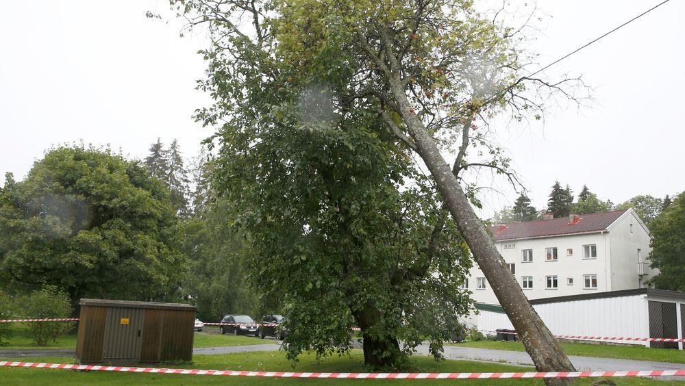 Været har skapt problemer på sør- og østlandet søndag. Tusenvis har tidvis vært strømløse på grunn av trær som har veltet over høyspentledninger.