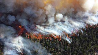 De siste månedene har Australia vært rammet skogbranner, som i følge NASA tilsvarte et utslipp på CO2-utslipp på 306 millioner tonn. Norgs oljeeksport tilsvarer det dobbelte - hvert år, påpeker innsender.
