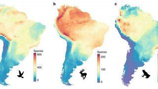 Danske forskere finner forklaringen på gåten om biologisk mangfold