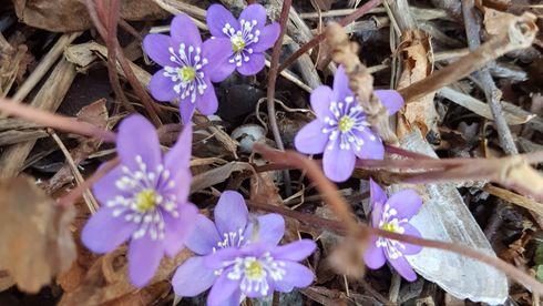 Korona: Derfor kan våren (kanskje) redde oss fra storsmitte