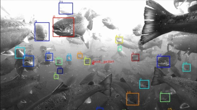 Tester ansiktsgjenkjenning på fisk: Skal gi bedre data om lakselus, fôring og vekt