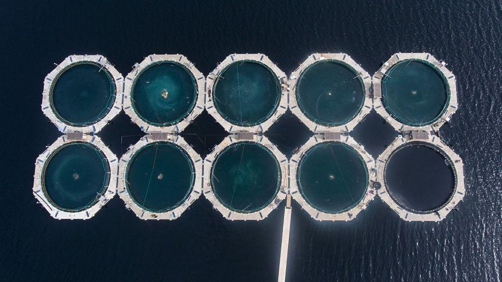 Akvafutures anlegg på Helgeland henter inn vann fra 20 meters dyp.
