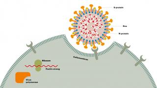 Mulig koronaframskritt: Forskere gir bort oppskrift på antistofftest laboratorier kan gjøre selv