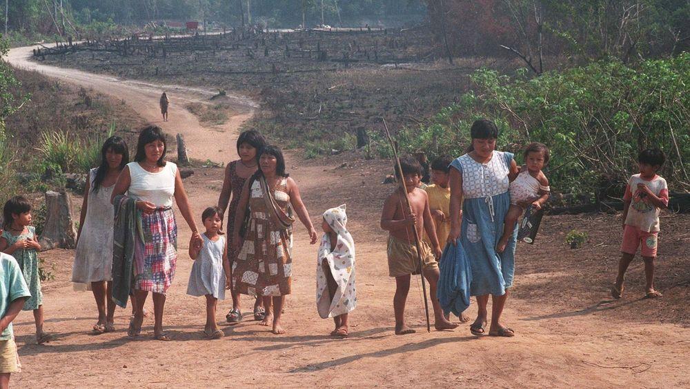 Avskoging er en stor trussel for det biologiske mangfoldet i verden. Det øker også risikoen for flere pandemier som covid-19.