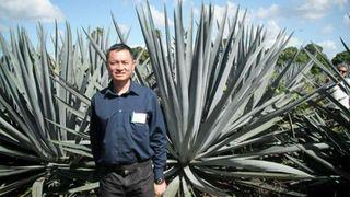 Agave brukes til å produsere tequila. Kan også ha en fremtid som drivstoff